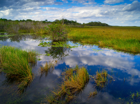 Grasses and reflections, Everglades National Park